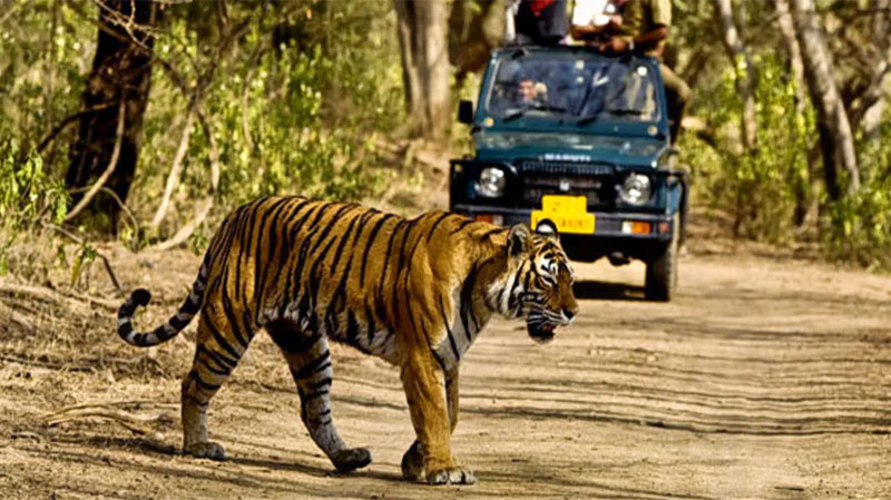 Coronavirus: Red Alert Issued In Rajaji Tiger Reserve, 30 Km Border With Population Area Declared Susceptible